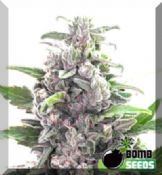 THC Bomb female seeds of cannabis for sale online